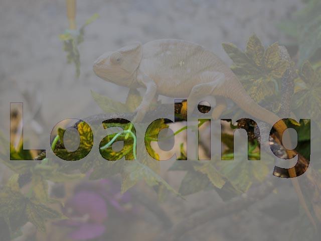 Chameleon online