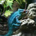 chameleon foto