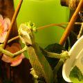 Кушаем листья салата