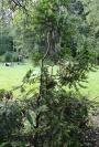 Сколько хамелеонов на дереве?