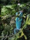 Шульц на елке