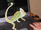 хамелеон, Теперь его очередь играть :)