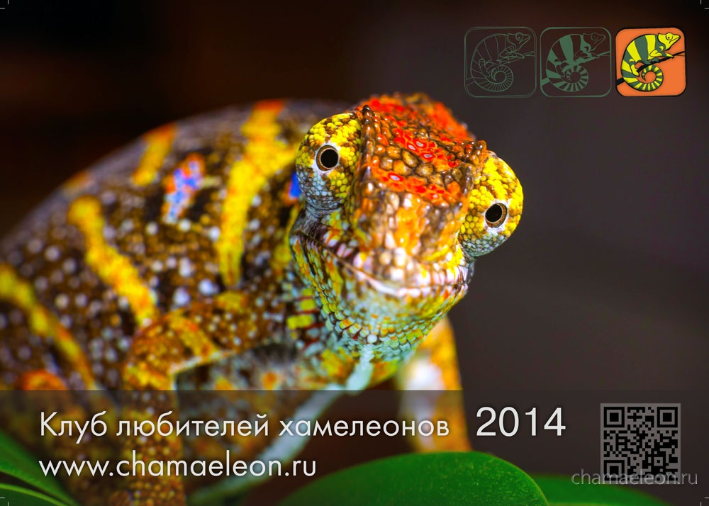 photo calendar 2014