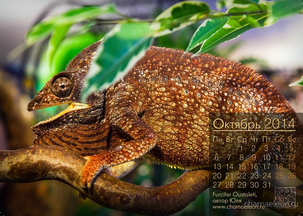 calendar_photo