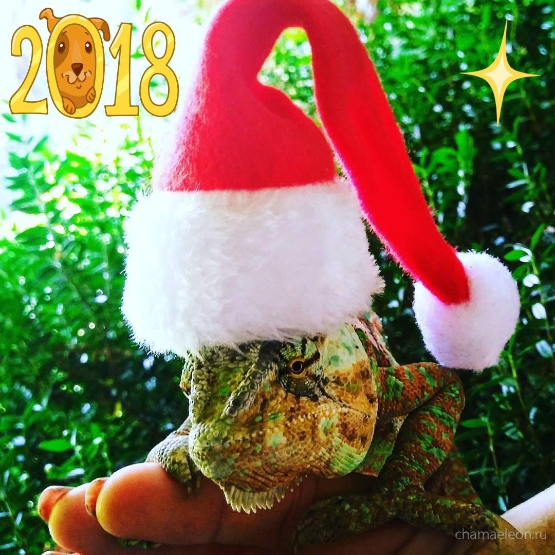 Хамелеон Дед Мороз