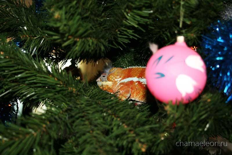 Хамелеон на елке